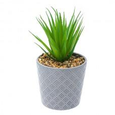 Aloe in ghiveci ceramic