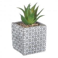 Ghiveci patrat cactus