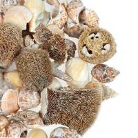 Set Coastal Shells Natural