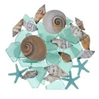 Set Coastal Shells Teal