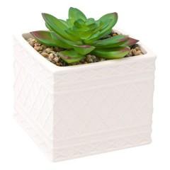Succulent in ghiveci ceramic